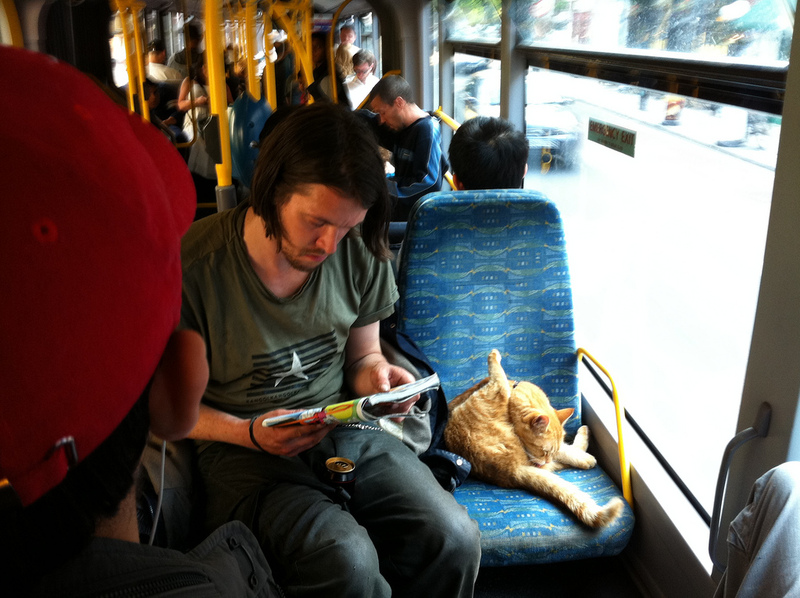 2011: Bob the street cat on a bus