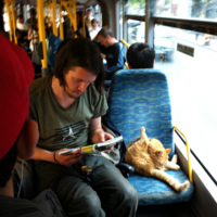 cat_on_bus.jpg